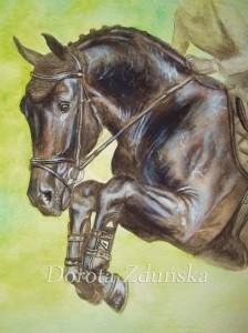 Saltado - koń skokowy, akwarele 29,7 x21cm