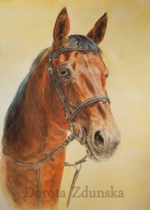 Portret włoskiego konia skoczka Kiwi wykonany na zamówienie, akwarele A3