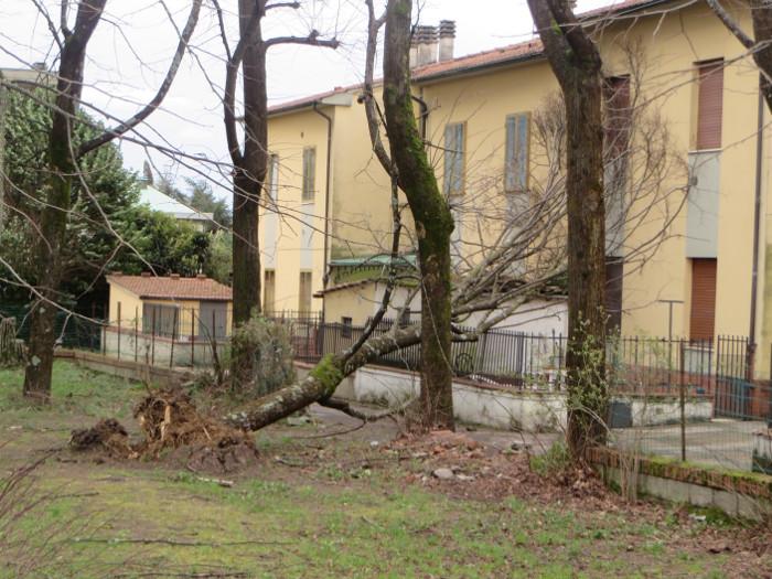 drzewo_na_domu_moja_toskania_wichura